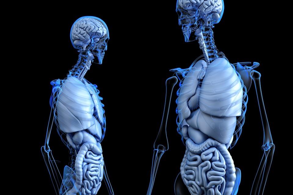 anatomical 2261006 960 720_Centru_Nutritie