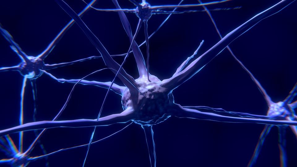 nerve cell 2213009 960 720_Centru_Nutritie