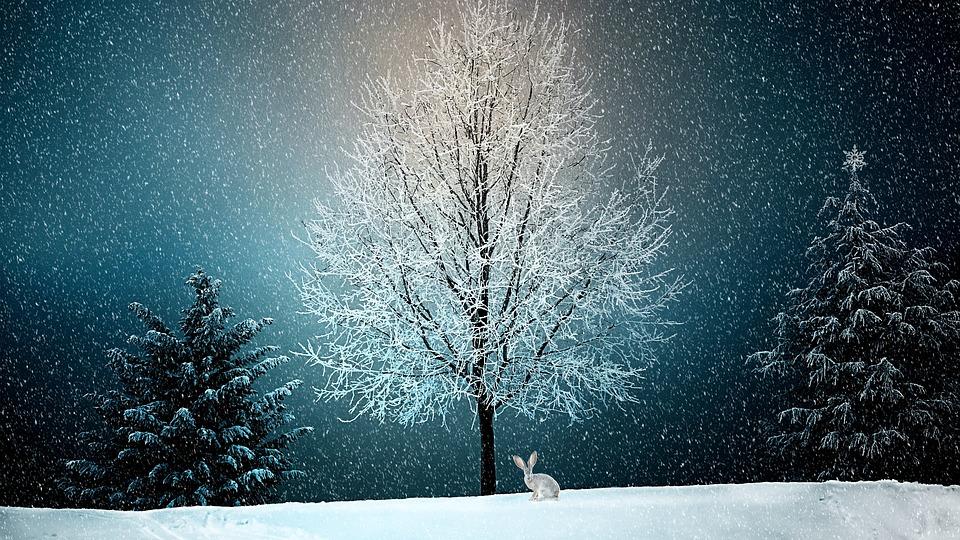 winter 2896970 960 720_Centru_Nutritie